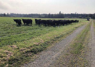 Grazing Organic Verdant Meadows