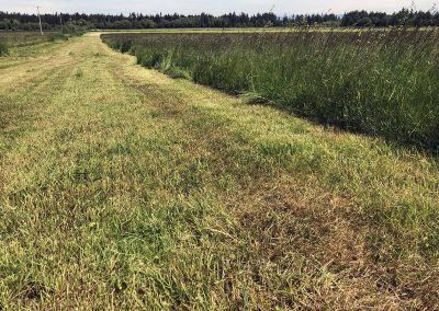 Silage Harvest of Rich Organic Meadows